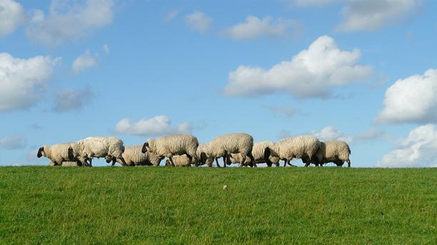 Réveillons-nous et cessons de nous comporter comme des moutons !
